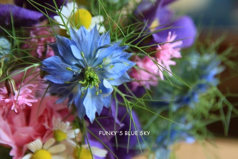 庭の小さなブーケ** (5月26日)_c0145250_11272710.jpg