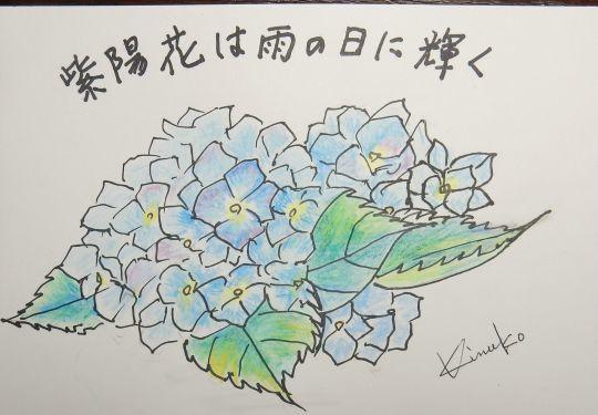 '19,6,23(日)紫陽花と向日葵とルッコラ!_f0060461_10241273.jpg