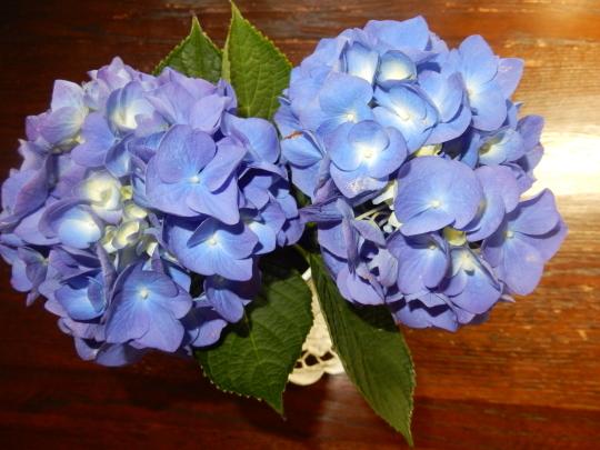 '19,6,23(日)紫陽花と向日葵とルッコラ!_f0060461_10244376.jpg