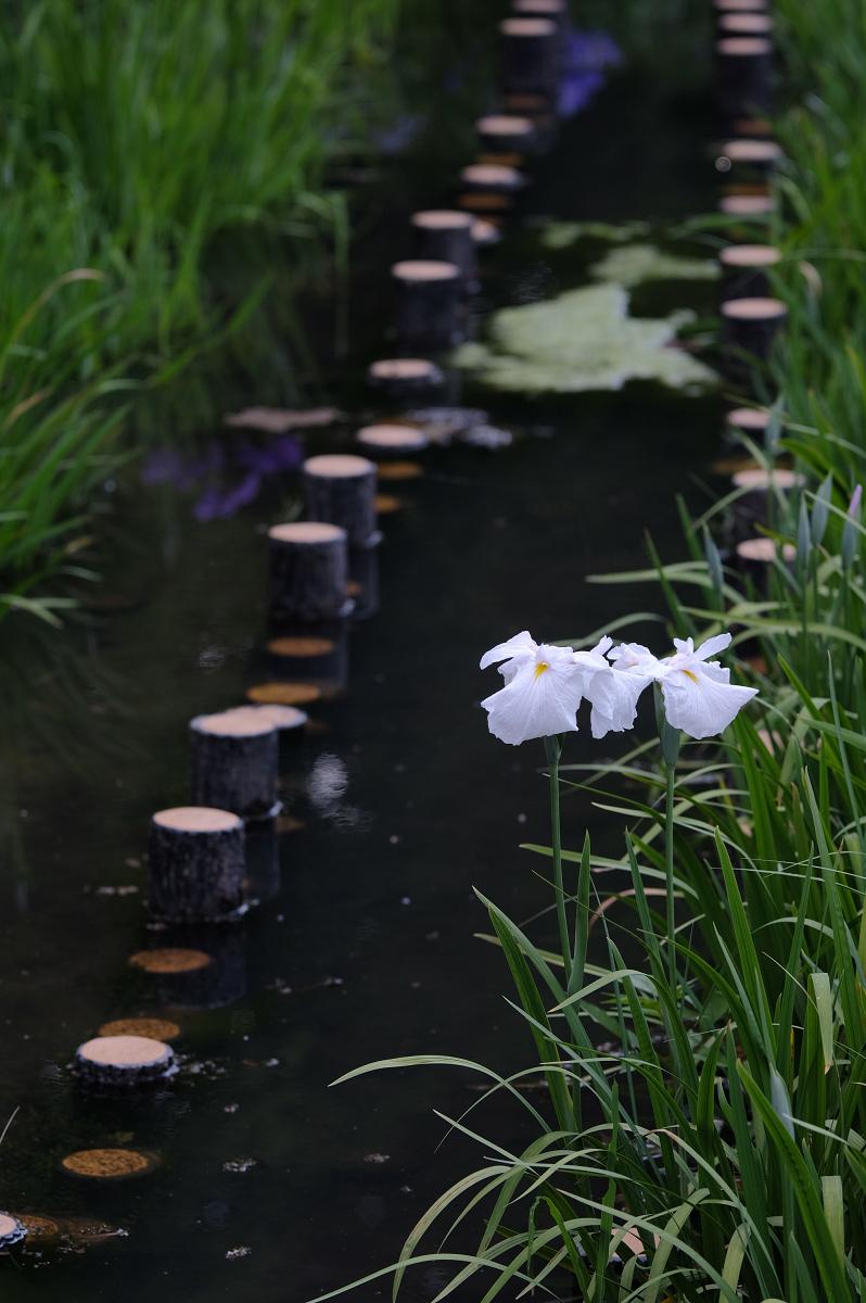 山田池公園_f0021869_23161108.jpg