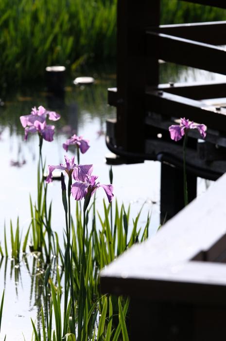 山田池公園_f0021869_23400243.jpg
