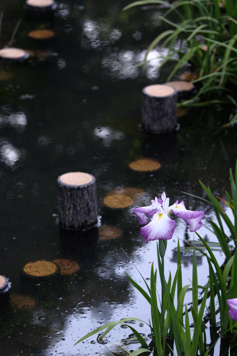 山田池公園_f0021869_23400374.jpg