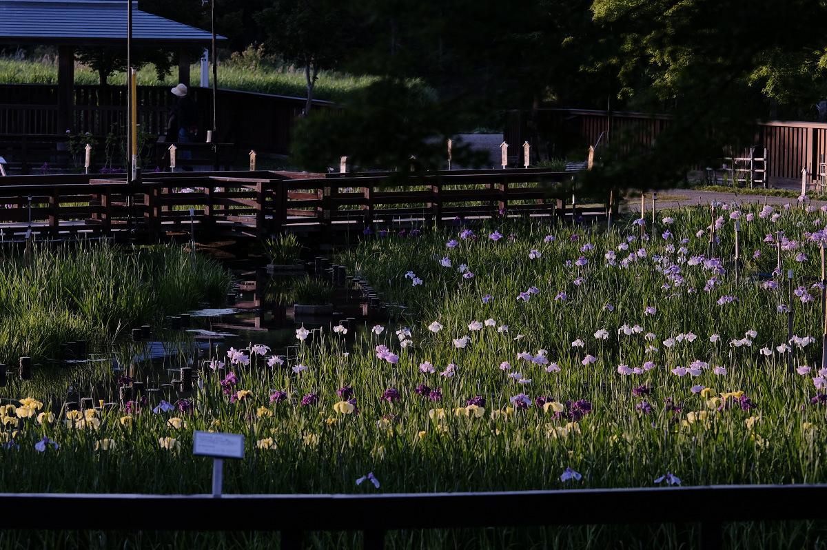 山田池公園_f0021869_23503170.jpg