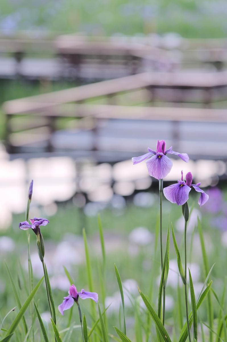 山田池公園_f0021869_23555191.jpg
