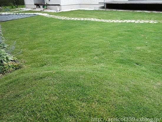 梅雨の庭しごと 芝刈りと植栽スペースの雑草対策_c0293787_20184601.jpg