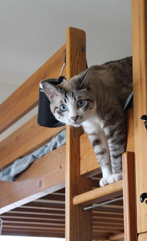 猫でも怖いものがある_a0333195_17343749.jpg
