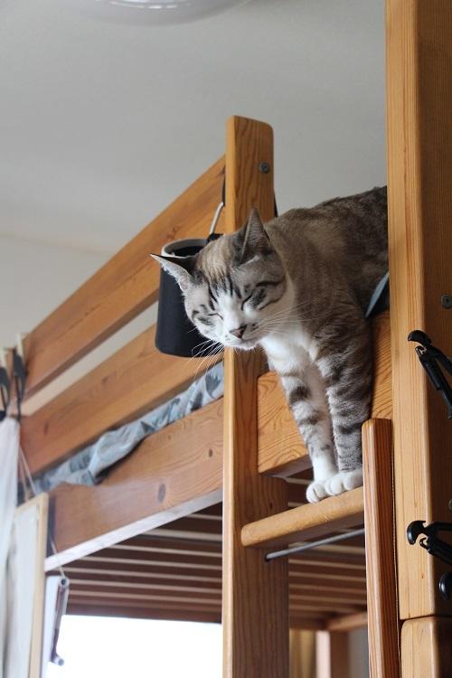 猫でも怖いものがある_a0333195_17344601.jpg