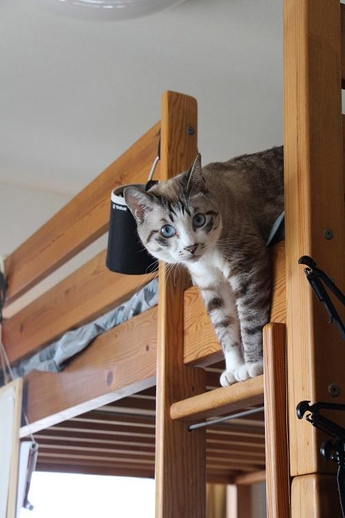 猫でも怖いものがある_a0333195_17345462.jpg