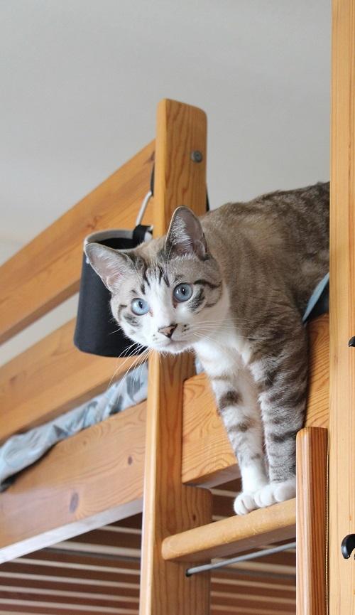猫でも怖いものがある_a0333195_17350200.jpg