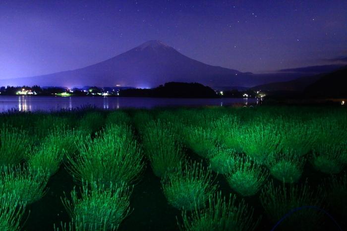 令和元年6月の富士(15)河口湖夜のラベンダーと富士_e0344396_16223770.jpg