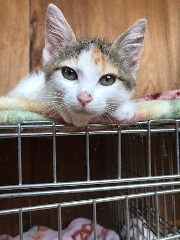 負傷収容だった子猫のふきちゃん_f0242002_12540207.jpg