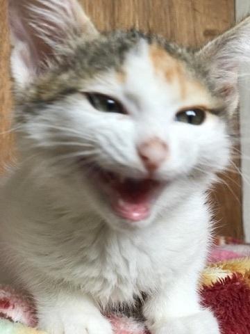 負傷収容だった子猫のふきちゃん_f0242002_12541648.jpg