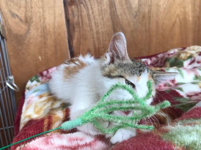 負傷収容だった子猫のふきちゃん_f0242002_12542024.jpg
