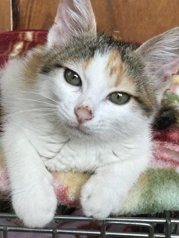 負傷収容だった子猫のふきちゃん_f0242002_12575862.jpg