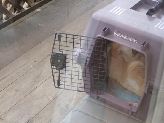 野良猫保護顛末記その(4)_f0064906_16585086.jpg