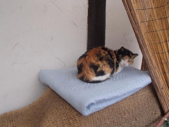 野良猫保護顛末記その(4)_f0064906_16585316.jpg