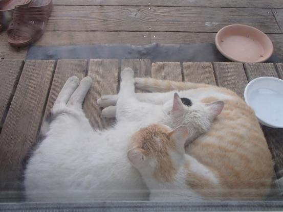 野良猫保護顛末記その(4)_f0064906_16585981.jpg