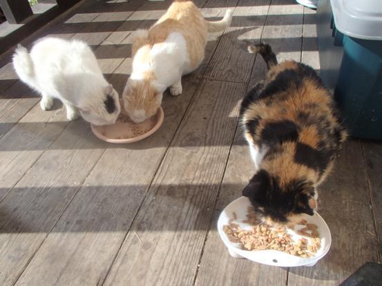 野良猫保護顛末記その(4)_f0064906_16590240.jpg