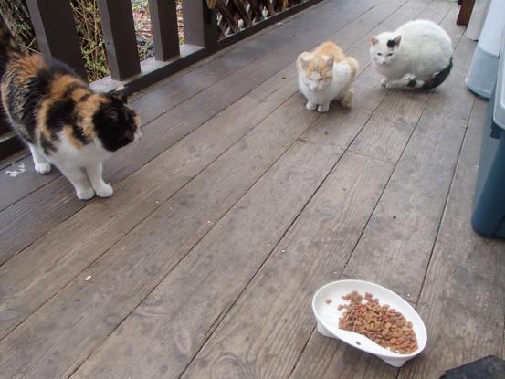 野良猫保護顛末記その(4)_f0064906_16590590.jpg