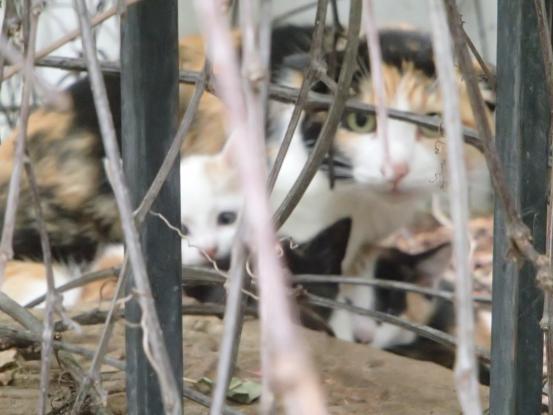 野良猫保護顛末記その(4)_f0064906_16591267.jpg