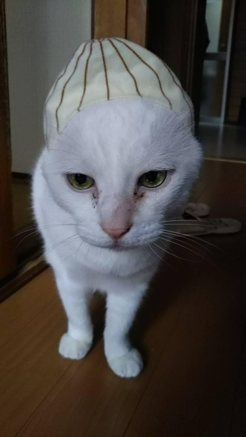 猫の玉ねぎ帽子 本当のどんたん日記_c0180209_05373519.jpeg