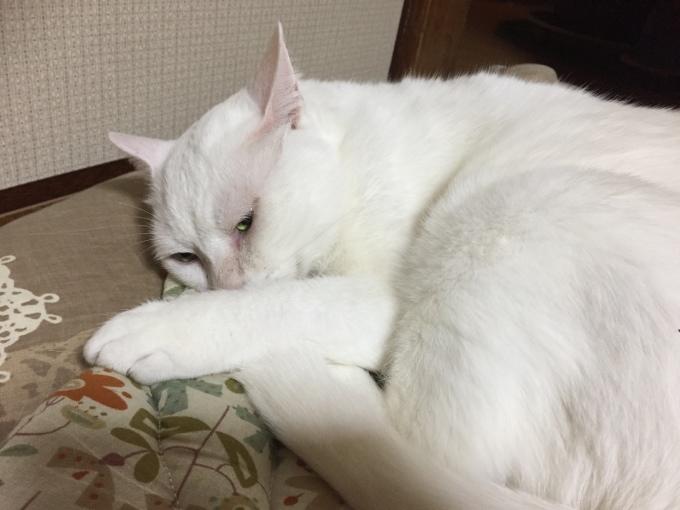 猫の玉ねぎ帽子 本当のどんたん日記_c0180209_05404186.jpeg