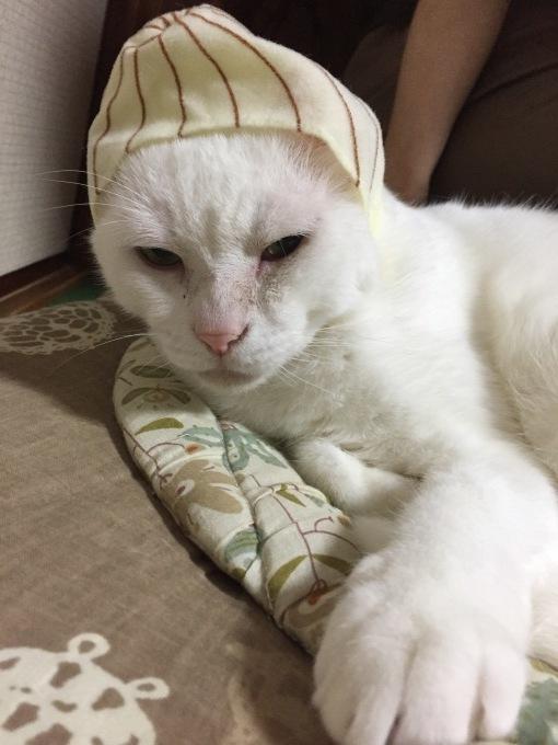 猫の玉ねぎ帽子 本当のどんたん日記_c0180209_05411321.jpeg