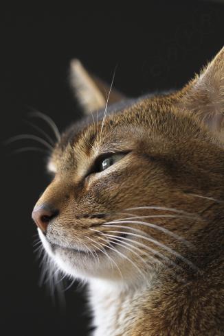 [猫的]ブラックシリーズ_e0090124_00061162.jpg