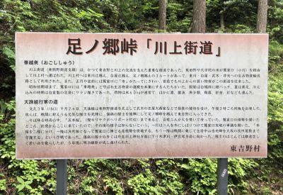 東吉野のコアジサイ群落_a0237937_19580653.jpg