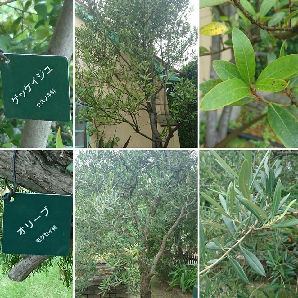 「とねりこの木」探し ~ブルーボネット編~_f0373339_15321487.jpg