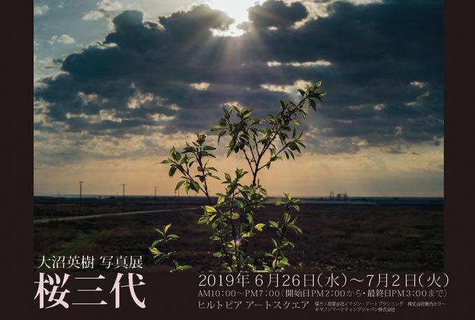 大沼英樹「桜三代」(東京)_c0142549_14483014.jpg