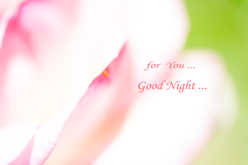 for You ..._a0333661_23234871.jpg