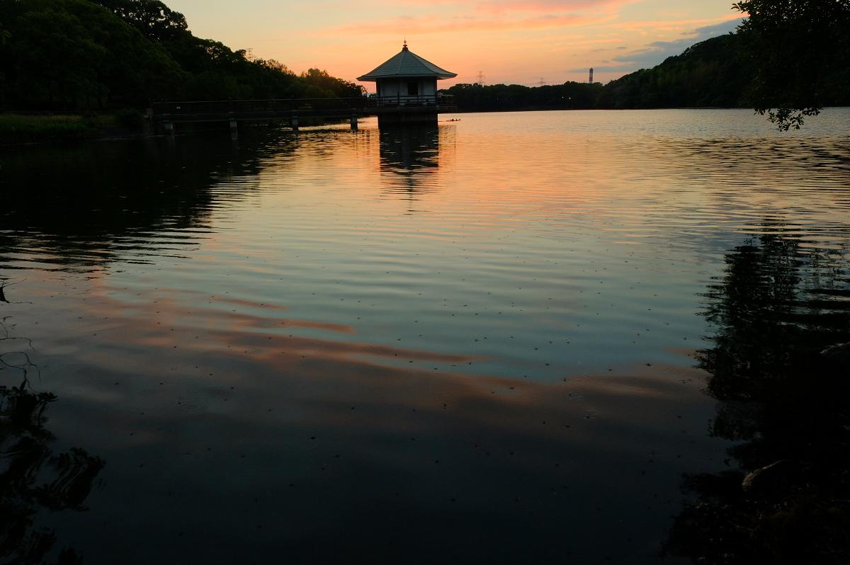 山田池公園_f0021869_00030260.jpg
