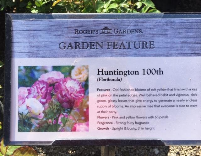 Huntington100thというバラ_e0350971_13401714.jpg