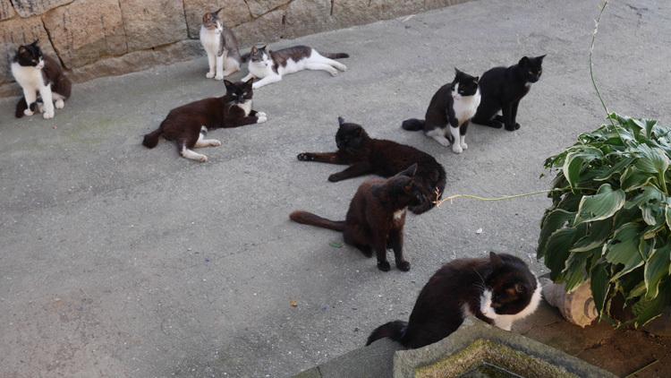 日陰に涼む島の猫_f0130879_22572359.jpg