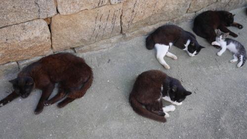 日陰に涼む島の猫_f0130879_22574151.jpg