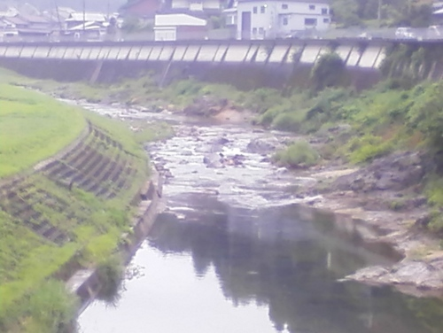 2019/6/24 水位観測  (槻の木橋より)_b0111189_05573194.jpg