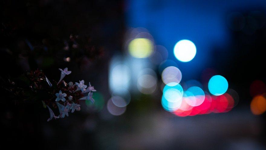 夏至の宵に戯れる光蜥蜴_d0353489_19134488.jpg