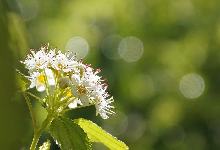 白い花_d0162994_08564662.jpg