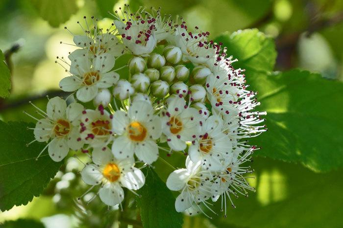 白い花_d0162994_08565737.jpg