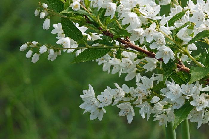 白い花_d0162994_08573132.jpg