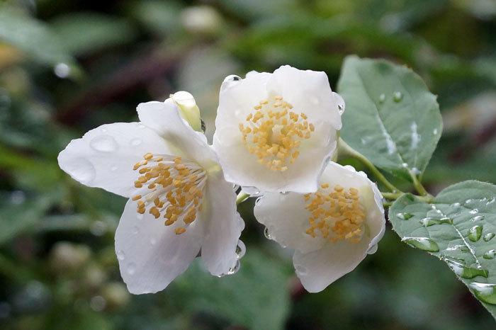 白い花_d0162994_08574282.jpg