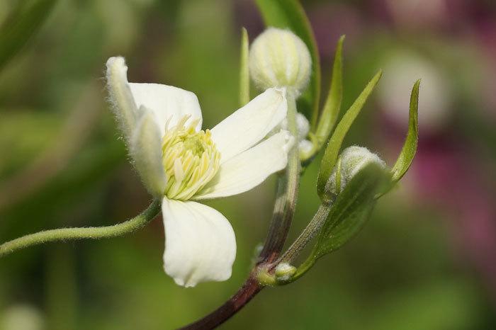 白い花_d0162994_08575545.jpg