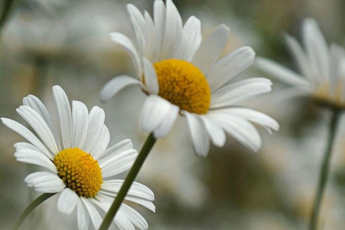 白い花_d0162994_08582123.jpg
