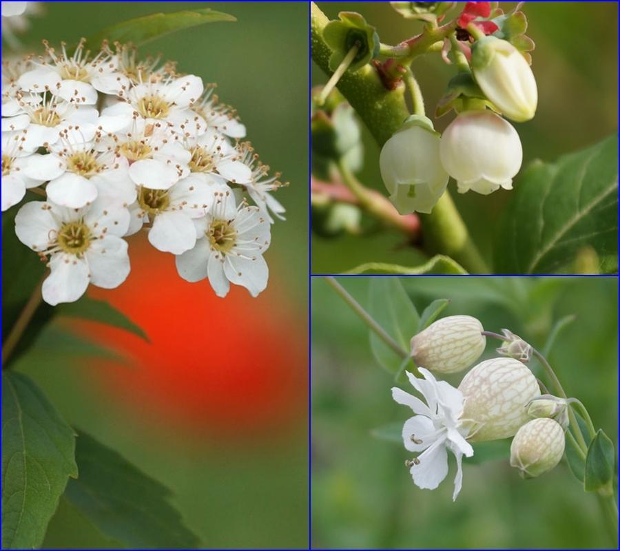 白い花_d0162994_08592702.jpg