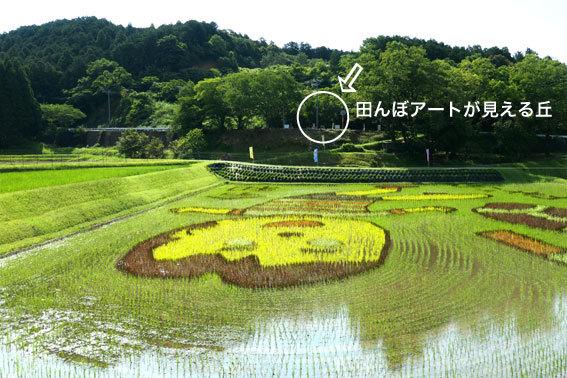田んぼアートがバッチリと_b0145296_18220225.jpg
