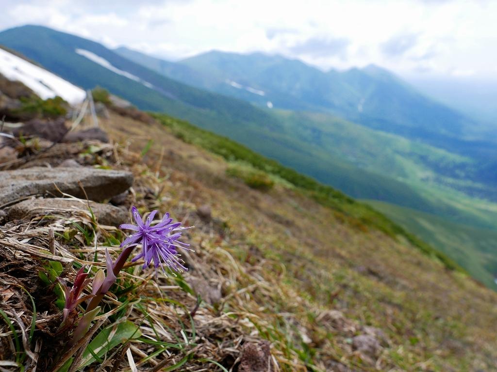 富良野岳、三峰山と上富良野岳、2019.6.24ー速報版ー_f0138096_23002115.jpg