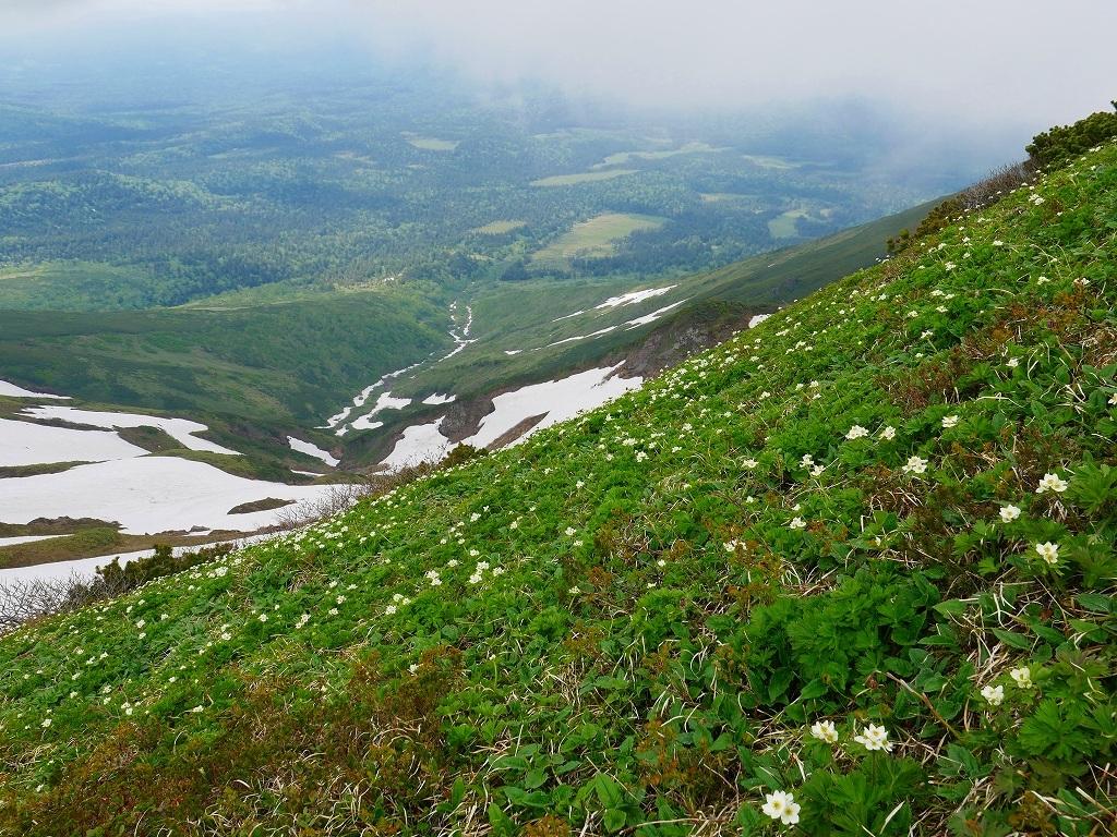 富良野岳、三峰山と上富良野岳、2019.6.24ー速報版ー_f0138096_23002409.jpg