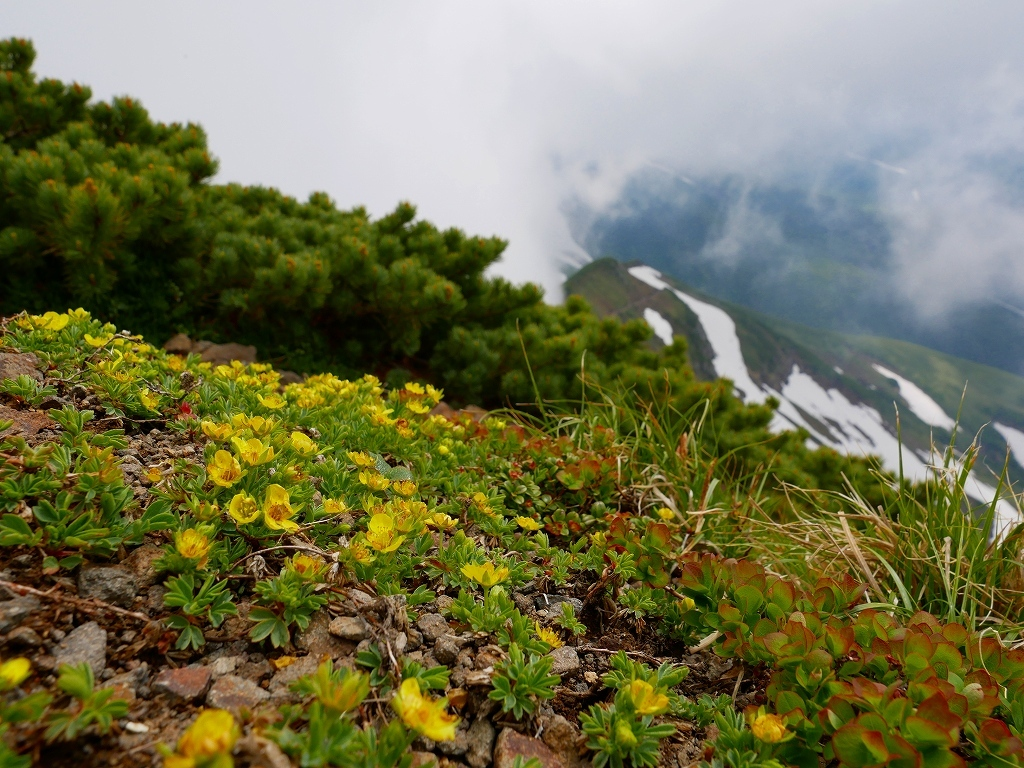 富良野岳、三峰山と上富良野岳、2019.6.24ー速報版ー_f0138096_23003258.jpg