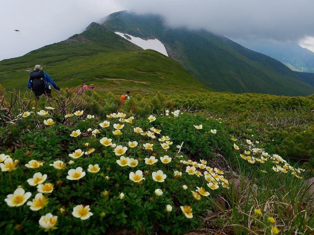 富良野岳、三峰山と上富良野岳、2019.6.24ー速報版ー_f0138096_23003701.jpg